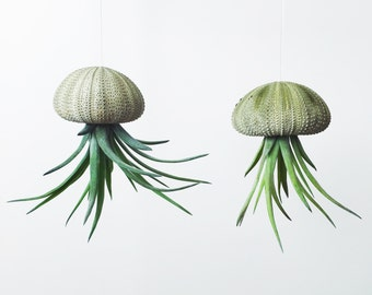 Small Air Plant Jellyfish Hanging Planter; Air Plant; Home Decor; Home; Desk Accessory; Jellyfish; Octopus; Tillandisa; Sea Urchin
