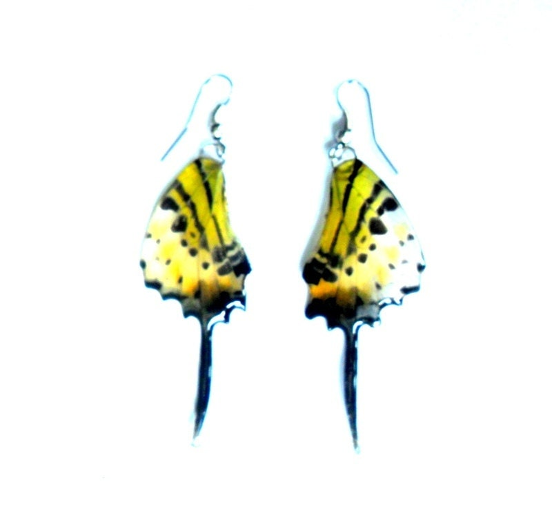 Real Butterfly Wings Earrings Handmade Jewelry Gift Natural