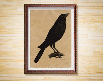 Crow print Animal decor Wildlife poster
