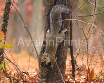 Squirrel with food