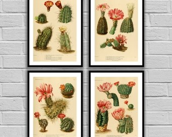 Cactus Print Set, Cactus Prints, Set of 4 Cactus, American Southwest Decor, Desert Art, Desert Home Decor, Cactus Wall Art, 85-88