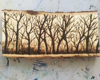 Original Forest Landscape