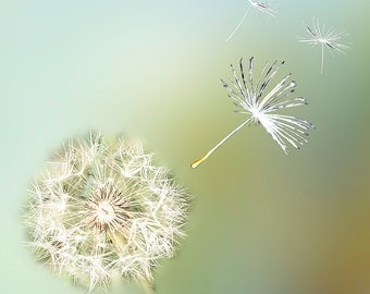 Dandelion Wall Art,Dandelion Art,Dandelion Photography,Dandelion Photo,Dandelion Photo Wall Art,Pastel Dandelion Photography,Art Photography