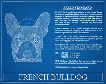 French Bulldog Portrait / French Bulldog Art / French Bulldog Wall Art / French Bulldog Print / French Bulldog Gift