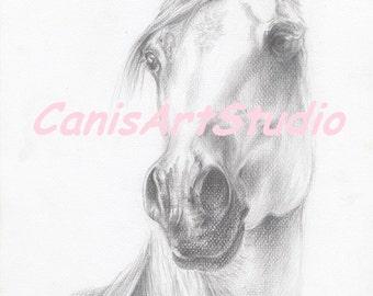 BEAUTIFUL ARABIAN HORSE head, Original pencil drawing, Hand drawn, Horse portrait, Equestrian Art, Black & White, 11 x 8 inch (no framed)
