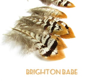 10 Striped pheasant feathers. Natural undyed craft feathers. Feathers for earrings and jewellery. Millinery feathers. UK Seller