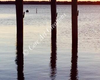 Bird On Docks