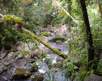 El Yunque Rainforest- Flowing Creek After a Rain