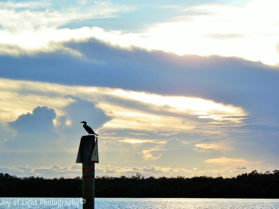 Bird Silhouette Photography, Silhouette Photography, Anhinga silhouette photography,Nature Photograph, Beach photography,summer,5660(2)
