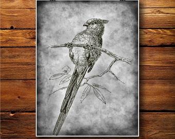 Bird Illustration, Fauna Art Decor, Swallow Print, Wall Hanging  BW398