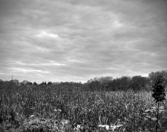 Black and White Cloudy Field Landscape