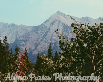 Nature Photography Wall Art - Mountains and Trees