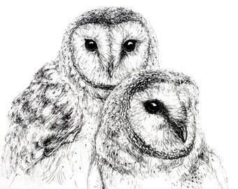 Beautiful Barn Owl. Good quality art print. A3 size.