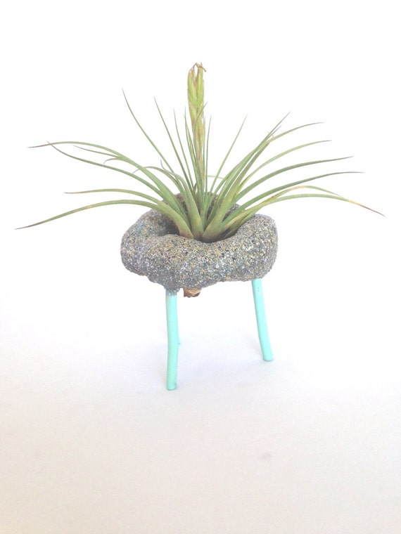 Air Plant Arrangement with Hand Carved Holder