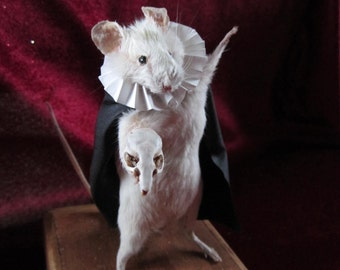 rat small taxidermy of opera taxidermy rat cabinet of curiosity oddities