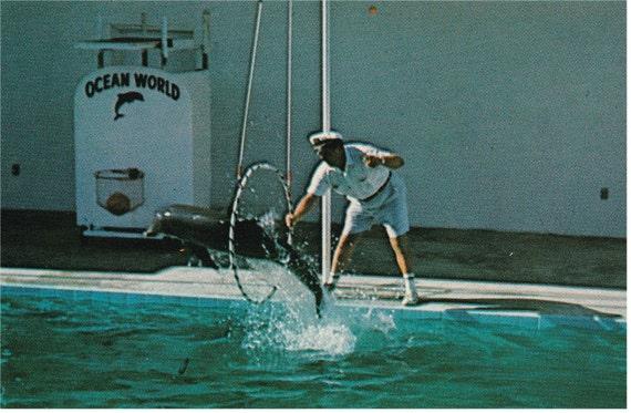 Ft. Lauderdale, Fl. - Ocean World - Postcard - 1993