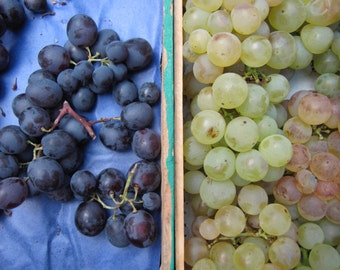 Return from the market: white grape and black grape!