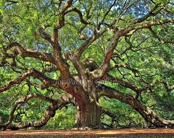 Angel Oak, Johns Island, Charleston, South Carolina, home decor, photo art, majestic trees, wall art, archival print, by Joe Parskey