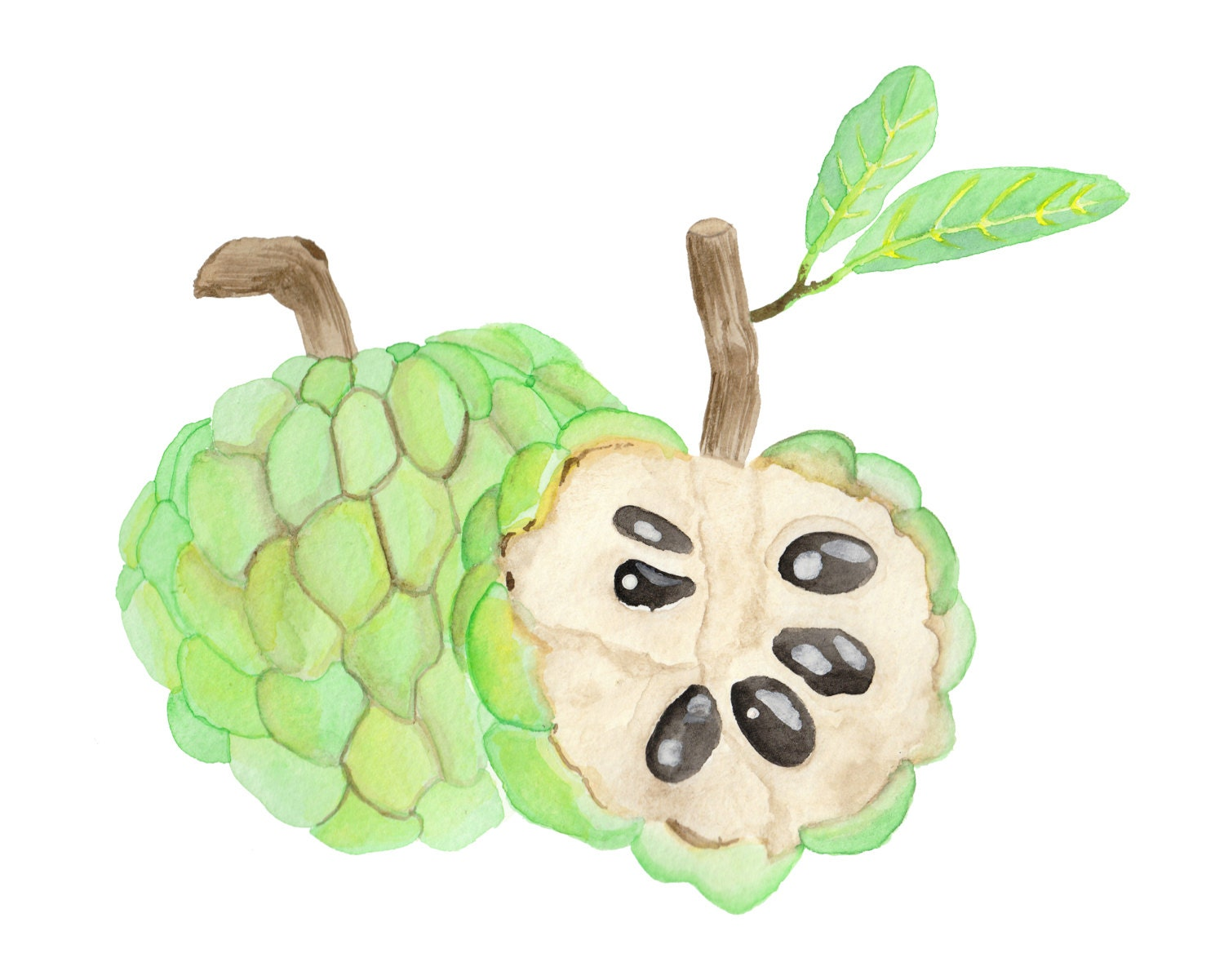Custard Apple Watercolour Food Illustration Print