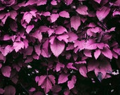 Violet Leaves Photo Print - Bedroom or Bathroom Wall Decor - Photo Decoration - Purple Photo - Violet Photograph - Purple Photograph
