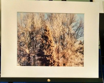 Winter  Trees 8x10 matted to 11x14