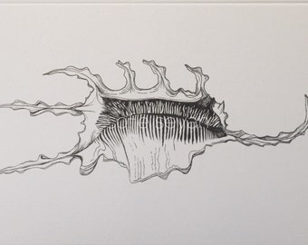 Spider Crab Shell - Black and White Nautical Seashell Illustration - Greeting Card