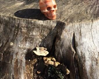 Natural Red Woodlike Crystal Skull