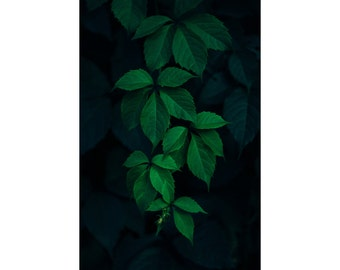Green Leaves Digital Photo - Botanical Print - Botanical Wall Decor - Green - Digital Photo - Digital Download - Instant Download - Vertical