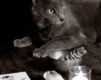 Witch's Familiar - Photographic Print on Canvas. Giclee. Wall Art. Home Decor. Pagan. Wicca. Cat. Goth. New Age. Fine Art.