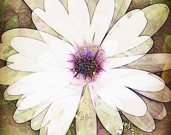 Card - Daisy