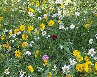 Wild Rock Garden Flower Seeds/Dwarf/Perennials    100+