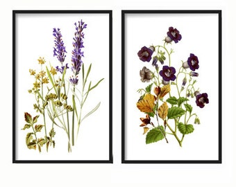 Botanical Print Set of 2 - Botanical Wildflowers Print set - Art Print - Antique Botanical Prints - Posters - Wildflowers - Wall Art