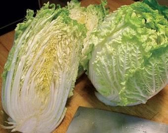 Organic Bok Choy (Chinese Cabbage) Seeds
