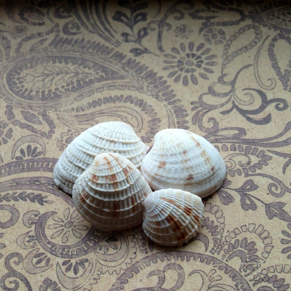 Sea Shells, Nautical Decor, Seashells For Sale, Seashell