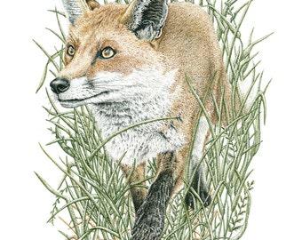 Prowling Fox - signed giclée print