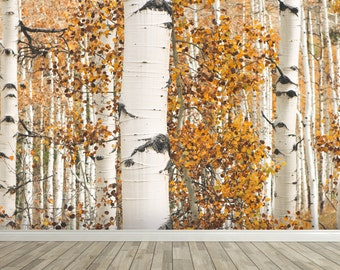 Removable Wall Mural - Autumn Birch Trees - Self-Adhesive Repositional Fabric Wallpaper - Full Sizes