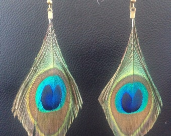Peackock Feather Earrings