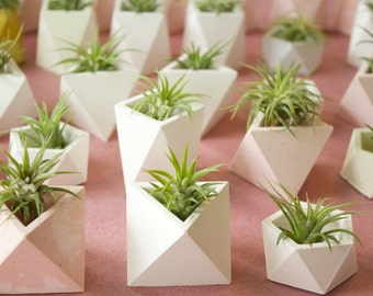 Geometric Planter Set
