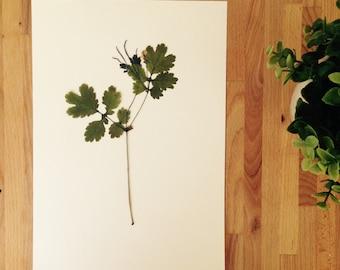 Herbarium 19