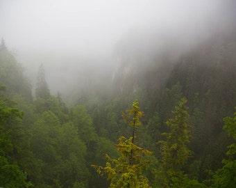 Misty forest in Neuschwanstein