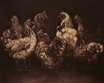 Hens Rooster poultry