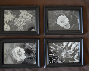 """Set of 4""""x6"""" Black and White Floral Photos"""