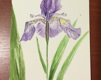 Original Postcard Purple Bearded Iris