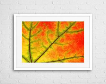 Maple Leaf Art Photo With Frame