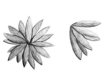Flower Art Print 8.5 x 11 Inch Print