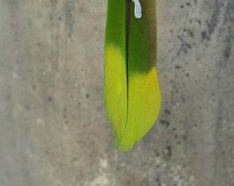 Amazon parrot earring
