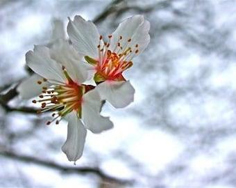 White flower print on canvas