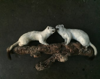 Late Victorian Large Taxidemy of Stoats