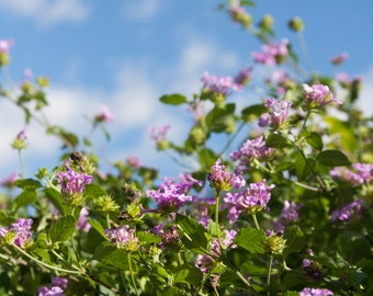 Spring Day: WALL ART Fine Art Photography Blue Sky Purple Flowers Green Leaves Sunny Spring Summer Day Bright Color Cheerful Happy Flowers
