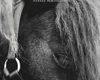 Horse Series_II